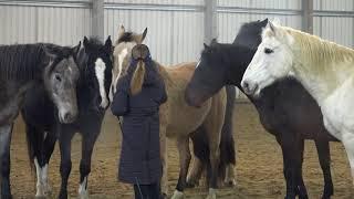 Хорошее поведение лошадей на тренировке