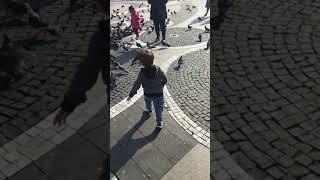 güvercinlere yem veriyor ağır çekim