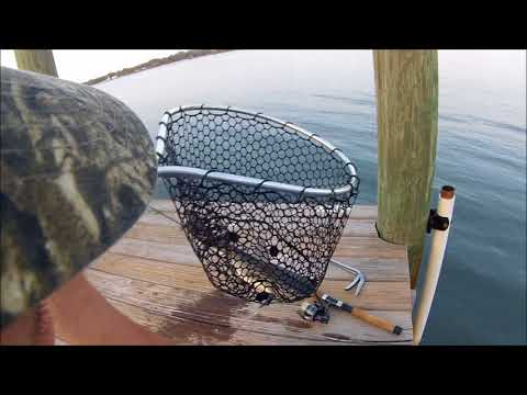 Saltwater Hardhead Catfish Catch And Cook!