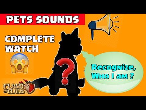 Guess the Pet name ? PETS SOUNDS....😍😍#cocshorts unknown pets sounds #shorts