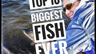 Top Ten BIGGEST Fish Catches Ever! Giant Fish!