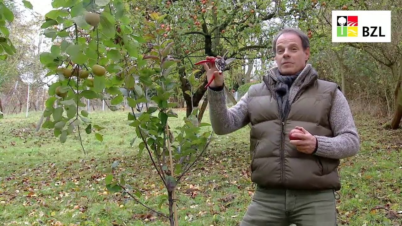Obstbaume Schneiden Teil 1 Grundlagen Youtube