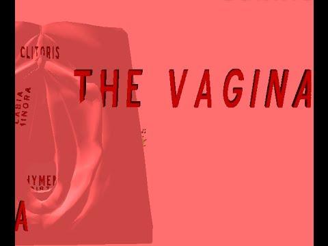 Vagina 3D - YouTube
