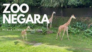 🇲🇾 Walking Around Zoo Negara, Kuala Lumpur 2021