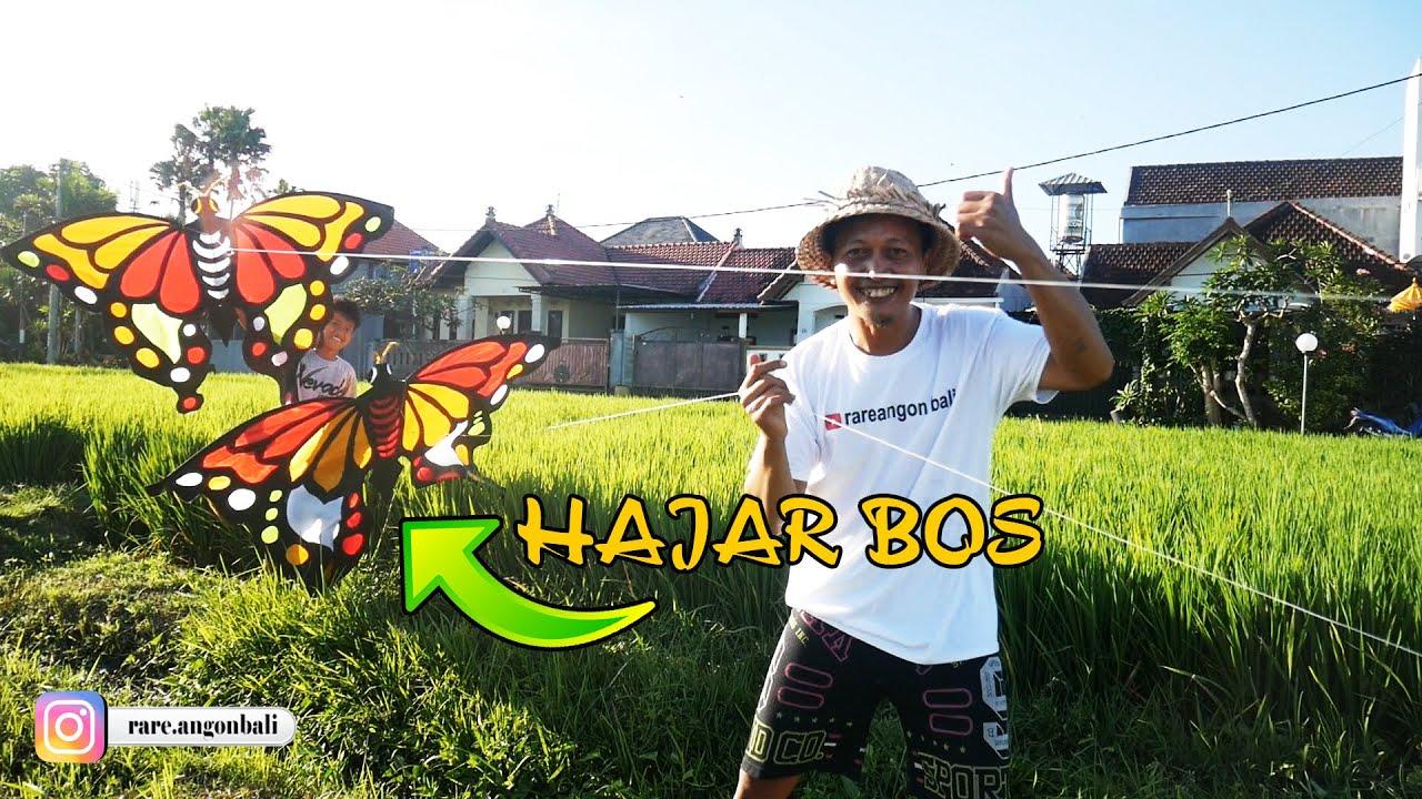 Hajar 2 layangan kupu-kupu BOSS | Rareangon Bali