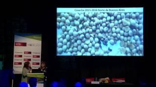 Sanidad de semilla de soja. Importancia del tratamiento de semillas (BAYER)