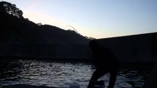 【岩手】延べ竿でウミタナゴのミャク釣り【6月】