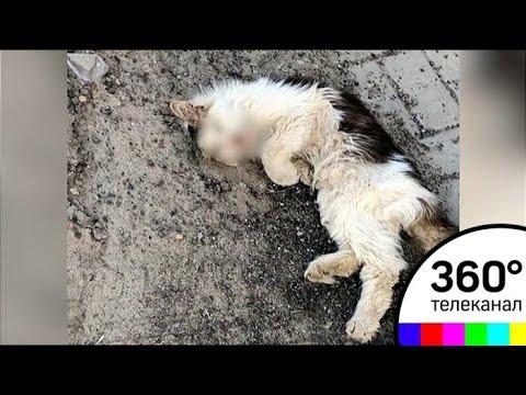 Скандал в Воронеже: породистую кошку за 500 тыс. нашли в кустах на обочине