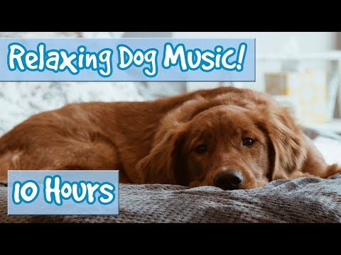 Relaxing Music for Dogs with Nature Sounds! Soothing Music to Calm Dogs and Get Rid of Anxiety! 🐶💤