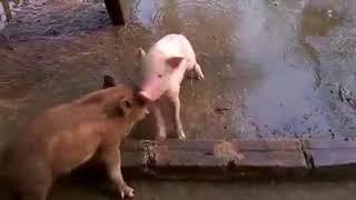 cuoc chien khoc liet giua hai laoi dong vat kinh nhat the gio