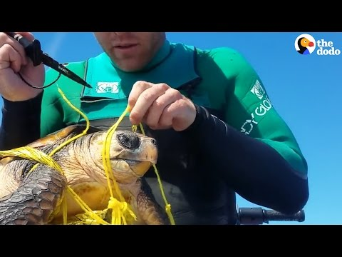 Man Dives Into Ocean To Save Sea Turtle Tangled In Trash