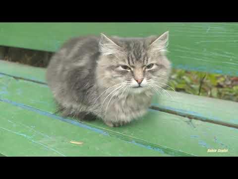 Cat Sound