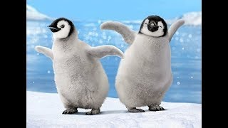 Its TIME to LAUGH - HILARIOUSLY FUNNY Penguins