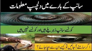 Interesting Facts In Urdu - Sanp Ke Bary Ma Dilchasp Malomaat - Sab Sy Zehrila Saanp Mamba
