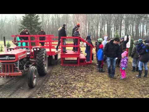 Tannenbaum Farms Fraser Fir Christmas Tree Flies Off Farm