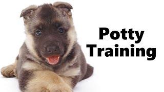 How To Potty Train An Alsatian Puppy - Alsatian House Training Tips - Housebreaking Alsatian Puppies