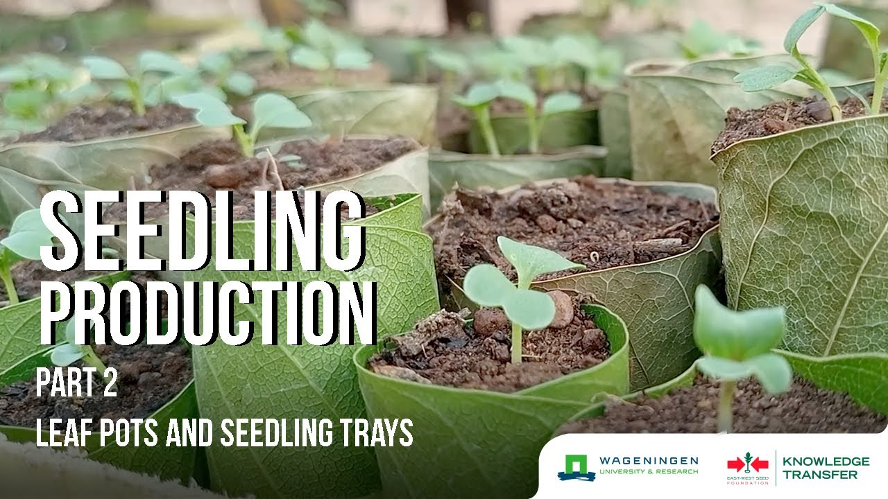 Download Seedling Production Part 2 – How to Make/Use Seedling Containers