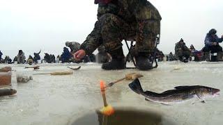 РЫБАКОВ БОЛЬШЕ ЧЕМ РЫБЫ Зимняя рыбалка на самодуры и поплавок не по первому льду