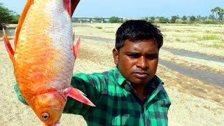 INDIAN FORMER MAKING GOLD FISH FRY RECIPE | VILLAGE FISH RECIPES | HOW TO MAKE GOLD FISH FRY