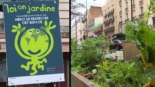 Le besoin de verdure pousse les Parisiens à jouer les jardiniers thumbnail
