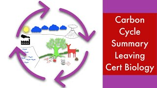 Carbon cycle-Summary-Leaving Cert Biology