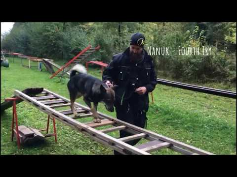 Rettungshunde Paderborn - Wreck Training - Part I - 2017