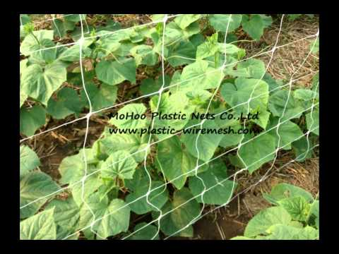 trellis netting,cucumber mesh netting,plant support net china supplier