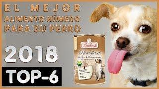 El mejor 🔥 Alimento Húmedo para su Perro 🐶 TOP-6 🔥