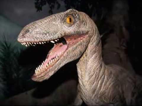 Tribute to Raptors