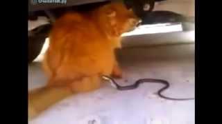 Лучшие приколы  Рыжий и нападающая змея на его хвост