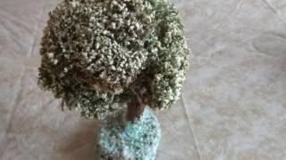 Исландский мох. Цетрария исландская. Декоративное дерево. Полезные свойства. Бонсай. Дерево мудрости