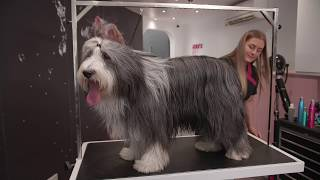 Long Coat Dog Grooming Guide