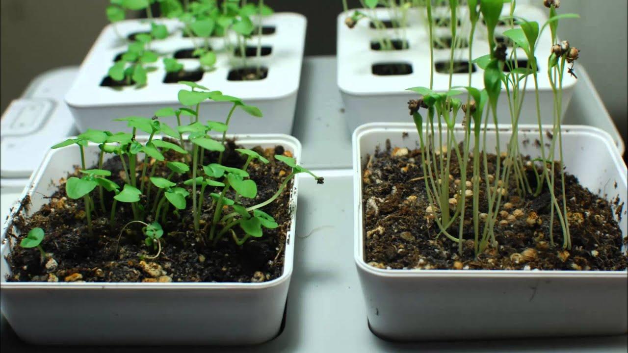 ZeroSoilGardens   Growing With The Mini Indoor Garden   YouTube