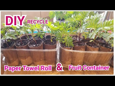 DIY: Paper Towel Roll & Fruit Container for Seedlings  RECYCLE