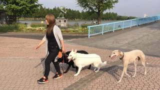 【吠える・噛む・引っ張る】どんな犬でもおまかせください!! 【お問い合...