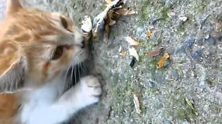 야생고양이 멸치로 길들이기 (중간에 심쿵주의)/cute cat