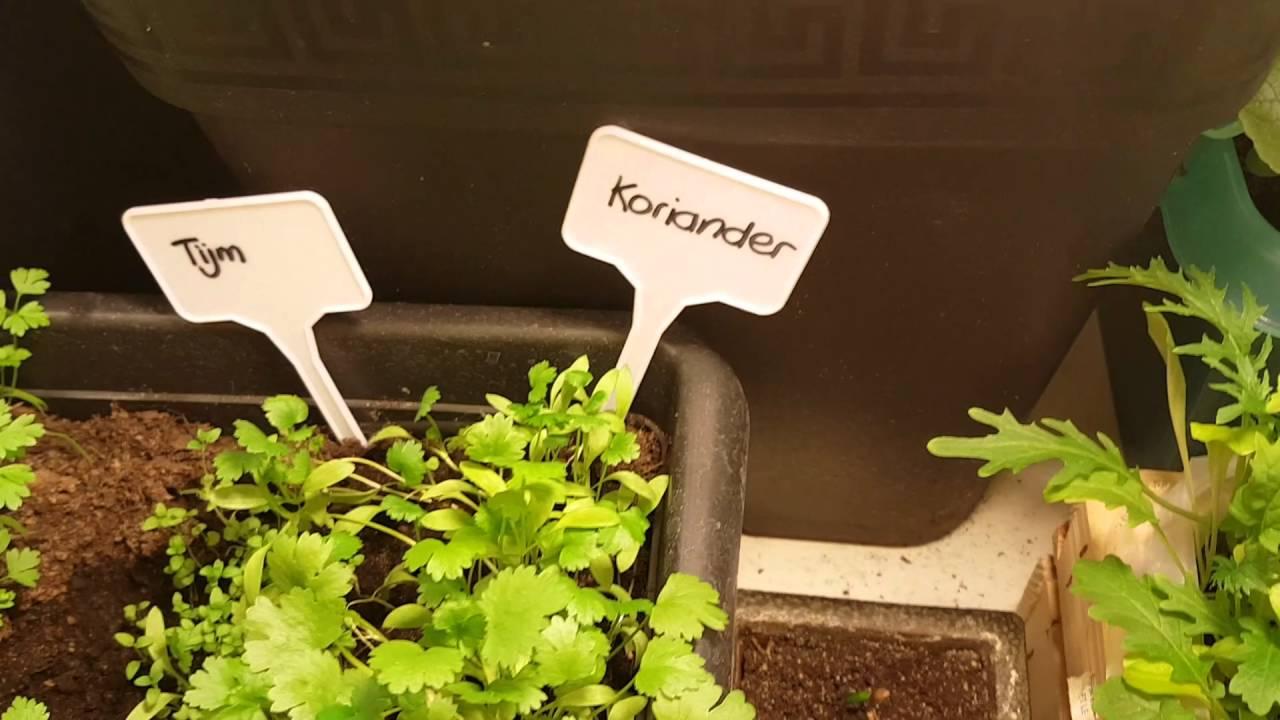 Memorable Indoor Garden Vegetables