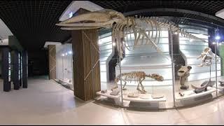공룡화석 모형