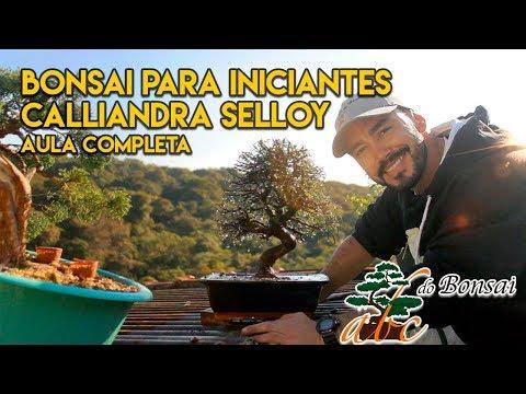 BONSAI PARA INICIANTES - AULA COMPLETA - CALLIANDRA SELLOY