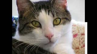 Pets Of The Week 07/02/09