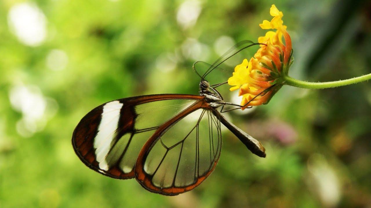 الحشرات الأجمل في عالمنا !!