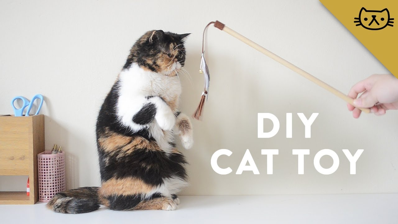 How to make a wand cat toy youtube for Diy cat wand