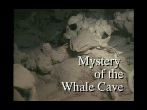 Mystery of the Whale Cave