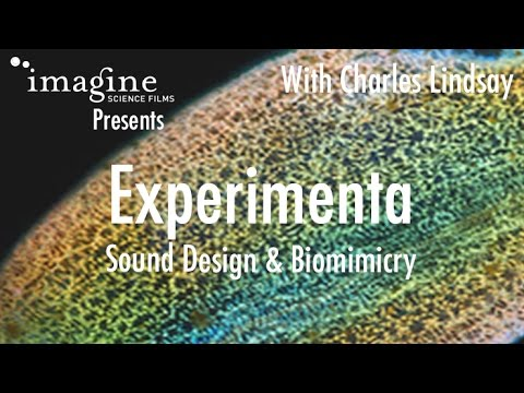 Experimenta: Sound Design and Biomimicry.