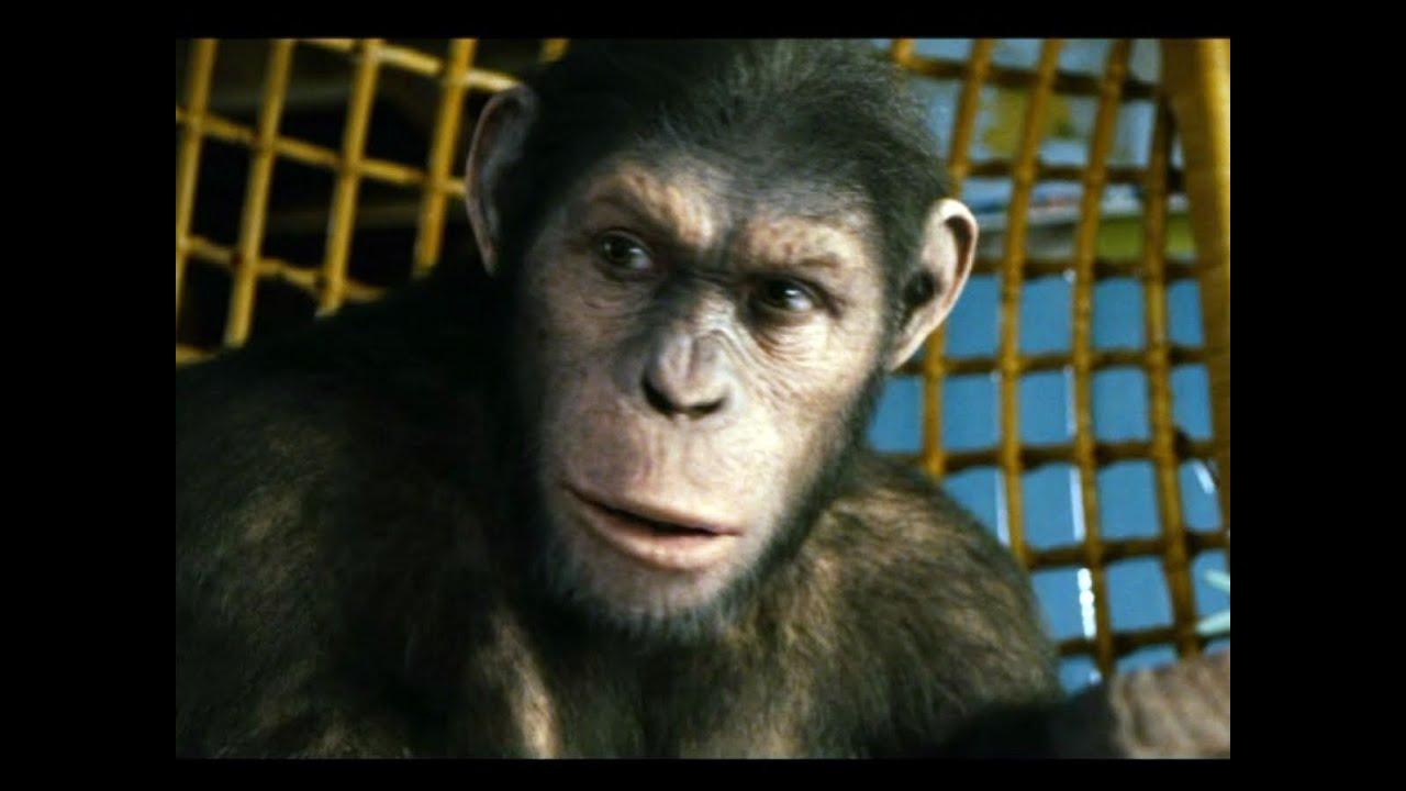 Planet Der Affen Prevolution