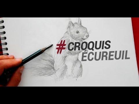 Dessiner Un Ecureuil Faire Un Croquis Animalier Youtube
