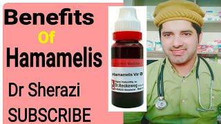 Hamamelis em hindi usa homeopatia