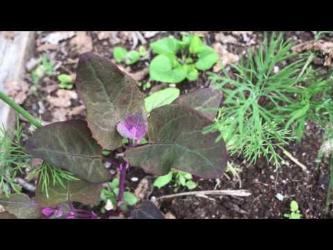 Vildsådda växter Mina 4 vildsådda grödor ger en smidig trädgård Vildsådder är enkelt att odla