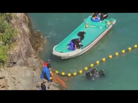 Taiji Japan 10/10/2017 - Multiple Species of Dolphins Decimated in The Cove