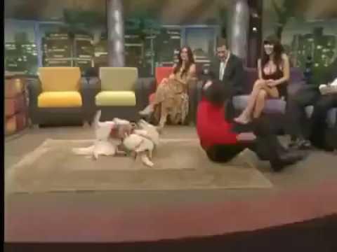 Afghan dog dance 😂